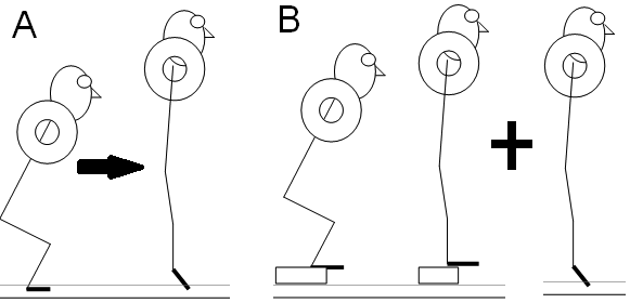 Dalen et al. image showing the effects of single-joint (isolated) vs multi-joint training in two groups performing a squat with calf raise of ballistic squat