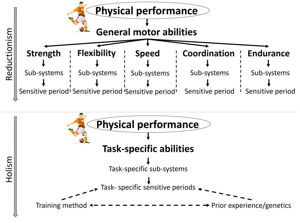 Figure 2. Reductionist approach with general motor abilities (top) and a holistic approach (bottom) to sensitive periods. In the reductionist approach to sensitive periods used in many LTAD models, the physical attributes of sports (e.g., soccer) are simplified into five general motor abilities (latent variables): flexibility, speed, coordination, endurance and strength. Sensitive periods are proposed for each general motor ability. This implies that the sub-systems that mature and are involved in each general motor ability are different, resulting in separate sensitive periods for all general motor abilities (upper image). The first issue with sensitive periods for general motor abilities is that these can refer to many different motor skills. A sensitive period for speed can for example refer to a sensitive period to improve maximum sprinting speed, but also to improve change of direction performance or maximum swimming speed. However, the sensitive periods to train maximum speed for sprinting or swimming or change of direction performance may differ because these are partly distinct motor skills with different involved sub-systems that have sensitive periods at different times. If sensitive periods exist, they are therefore likely largely task-specific with each motor skill integrating a network of abilities and sub-systems, potentially resulting in task-specific sensitive periods (lower image). Whether a sub-system is sensitive to certain training methods however also depends on the exact training method used, and the prior experience and genetic predisposition as indicated by the dashed arrows.