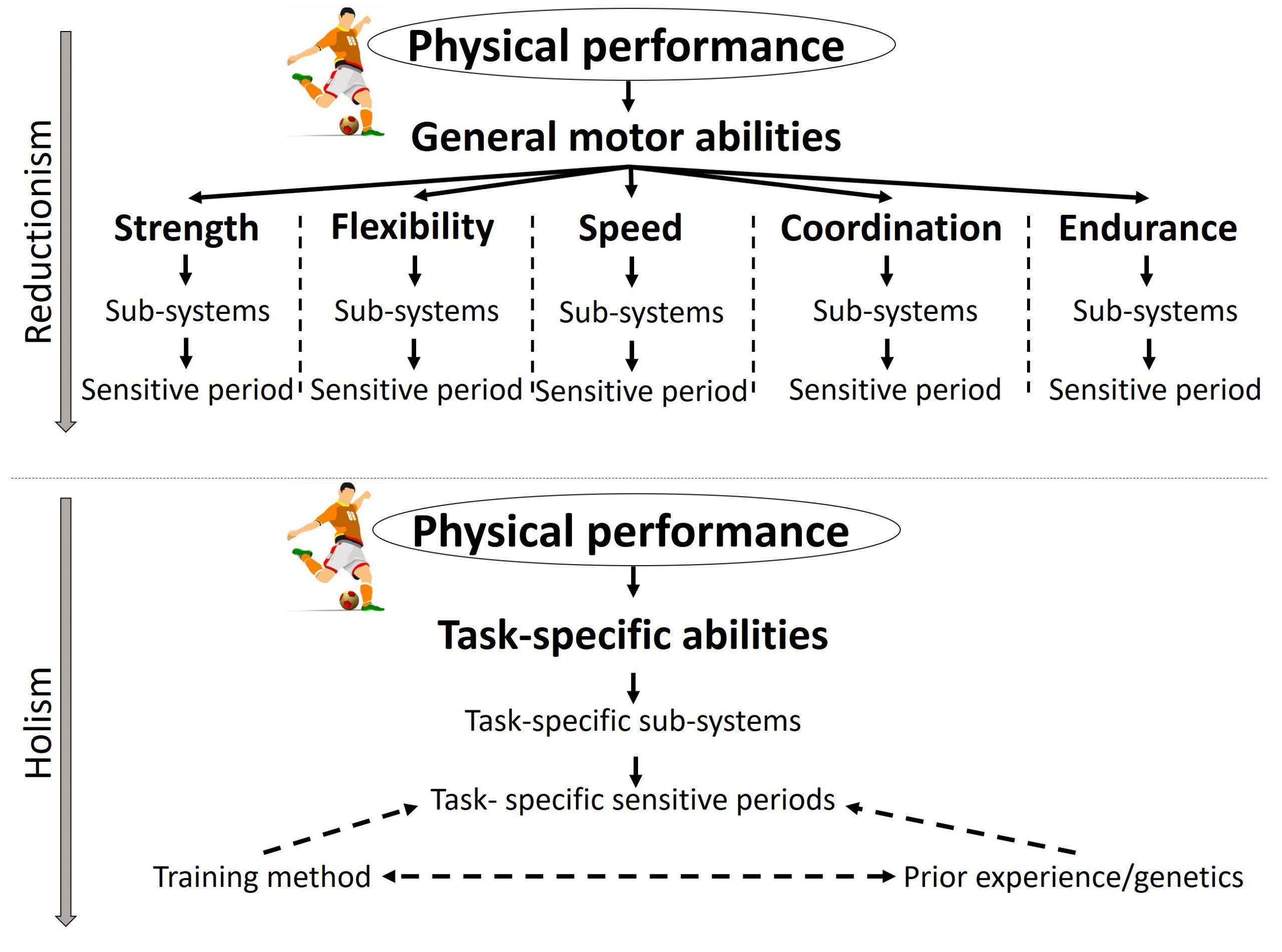 Sensitieve periodes training hollistische aanpak